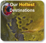 Our Hottest Destinations